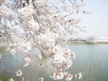 【結果】春季部内選手権大会(2016/04/05)
