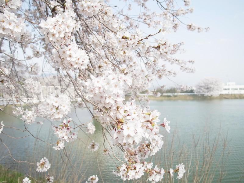 【ご案内】2/18 蹊剣会総会及び卒業生を送る会並びに懇親会 他
